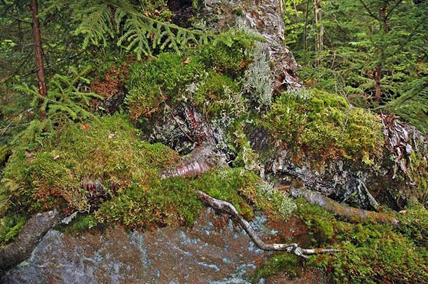 Water Filtration Moss