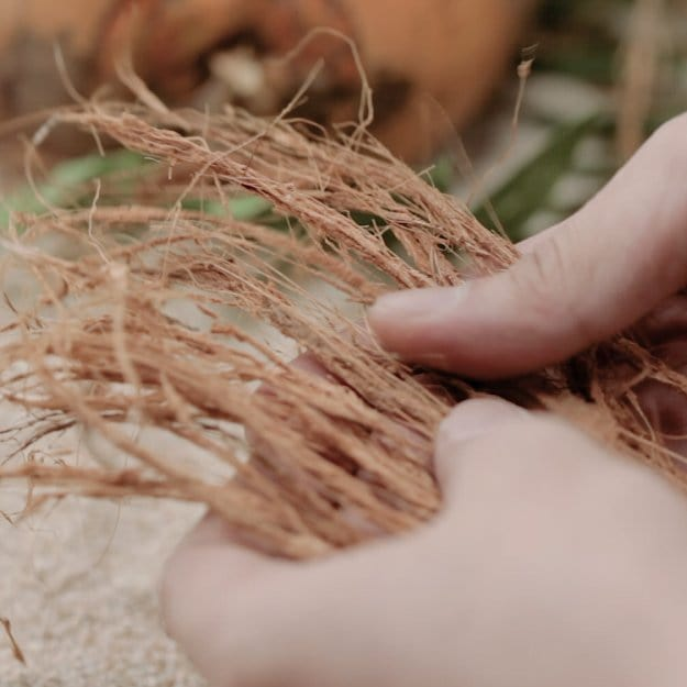 Prepare the Coconut Fibers | DIY Cordage | How to Make Your Own Coconut Rope
