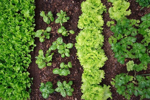 grow your own herbs and vegetables