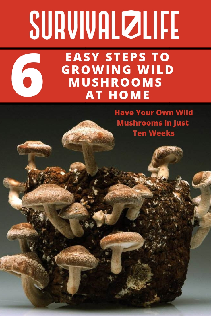 Check out 6 Easy Steps to Growing Wild Mushrooms at Home at https://survivallife.com/growing-wild-mushrooms/