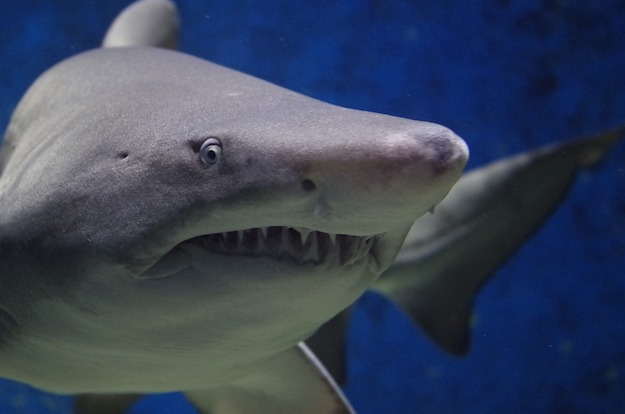 Sharks | Dangerous Creatures and How to Avoid Them