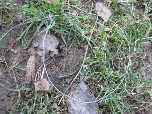 spring snare wire 2