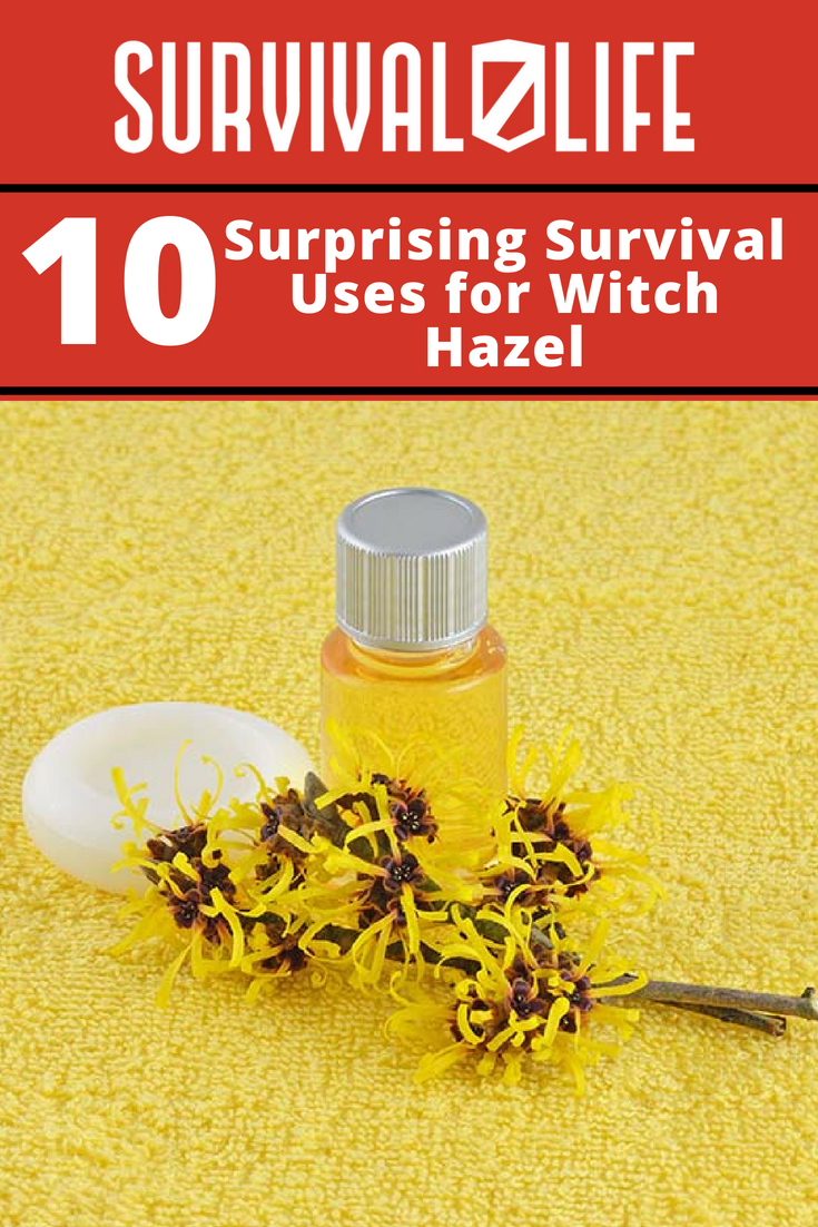 Check out 10 Surprising Survival Uses for Witch Hazel at https://survivallife.com/surprising-survival-uses-witch-hazel/