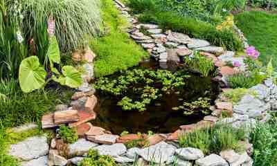 Beautiful pond in a backyard surrounded with stone during summer | Freshwater Fish Farming Tips For Homesteaders | Featured