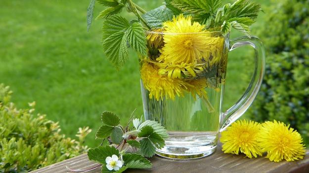 Dandelion Tea | Herbal Teas and Their Medical Benefits