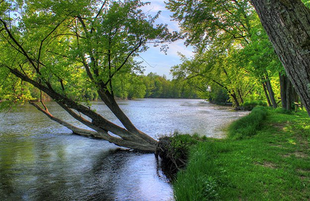 A low-hanging tree branch stretches across the Oconto river in Wisconsin.