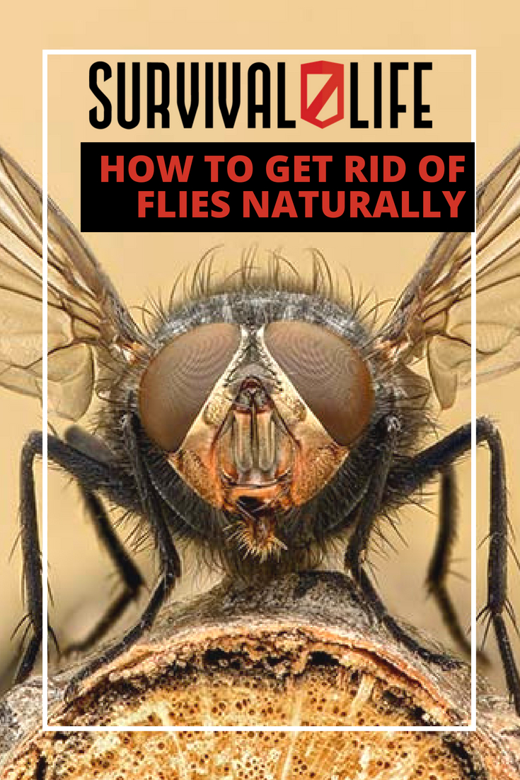 How To Get Rid Of Flies Naturally And Effectively | https://survivallife.com/get-rid-flies-naturally/