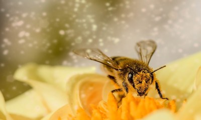 Top 10 Healing Benefits of Bee Propolis