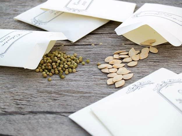 Reading the Seed Packets: What to Look For | Fall Garden Planting Tips For The Late Summer