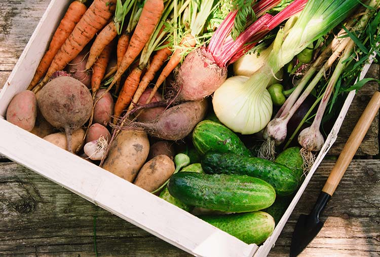 A variety of vegetables piled together after a late summer harvest.
