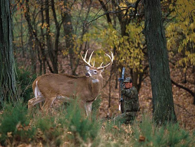 Firearms Hunting   Connecticut Hunting Laws and Regulations