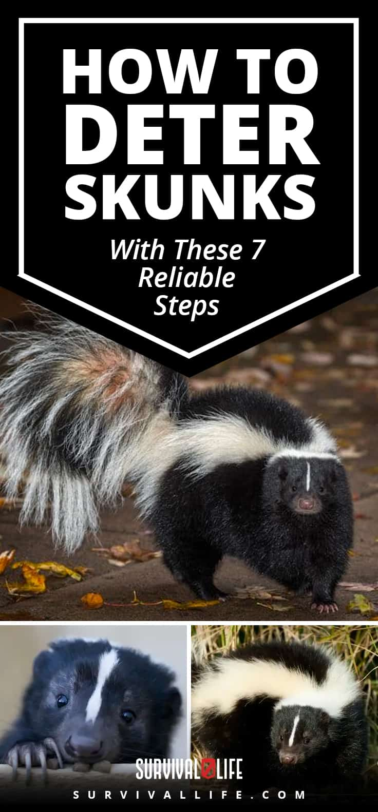 How To Deter Skunks With These 7 Reliable Steps | https://survivallife.com/deter-skunks/ 