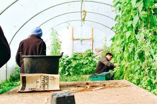Winter Gardening | Winter Gardening Tips: The Prepper's Guide to Cold-Weather Gardening | gardening in winter months