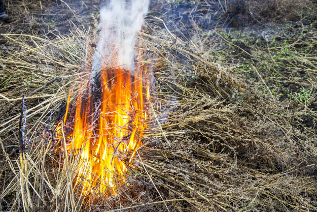 dry-grass-burning Flint and Tinder   Fire Making Basics For Everyday Survivalists Like You