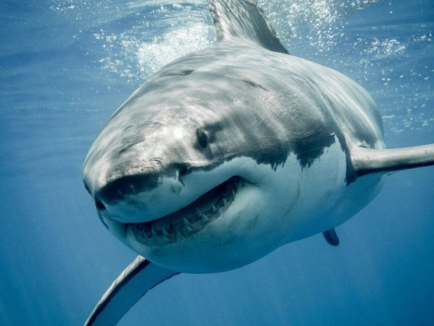 Sharks   Wild Animal Attacks   What To Do When Attacked By Ferocious Beasts