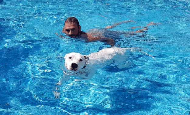 10 Reason Every Prepper Should Own A Pit Bull swimming