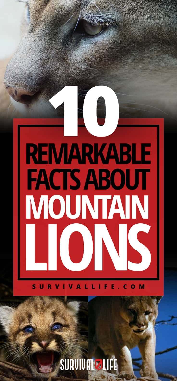 Remarkable Facts About Mountain Lions | https://survivallife.com/facts-about-mountain-lions/