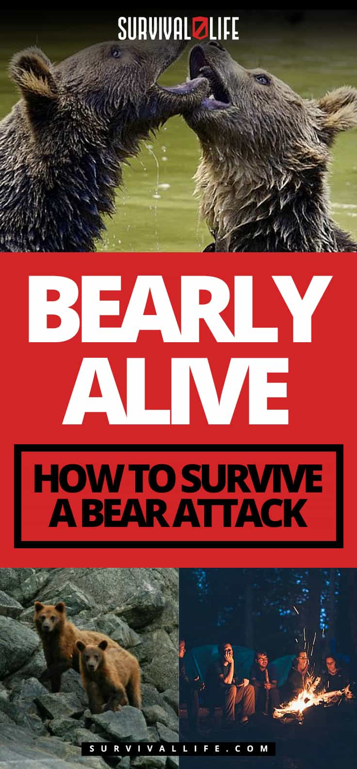 Bearly Alive – How To Survive A Bear Attack