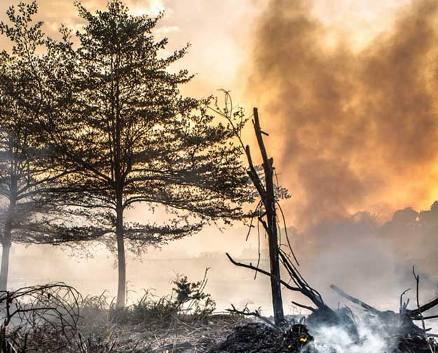 Plan Ahead in Case of a Wildfire | Disaster Survival Skills: Getting Ready for the Worst