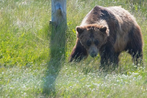 Tip #5: Don't Run | Bearly Alive - How To Survive A Bear Attack