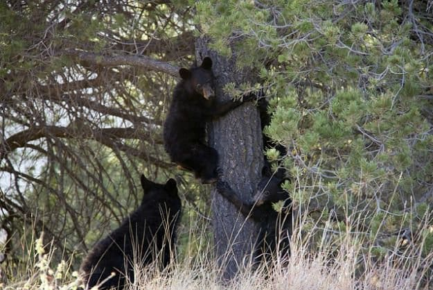 Tip #7: Don't Climb a Tree | Bearly Alive - How To Survive A Bear Attack