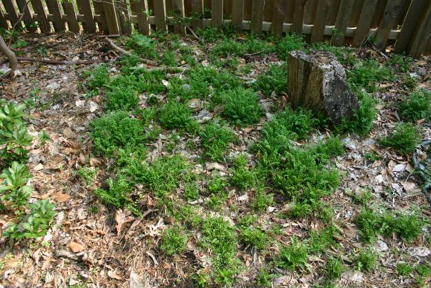 garden weeds   Preparing Your Spring Garden Now   It's Never Too Early!