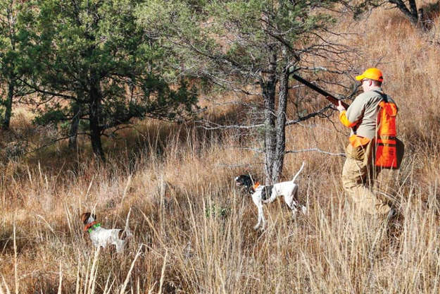 Look for fresh tracks | Practical Quail Hunting Tips Every Hunter Should Follow