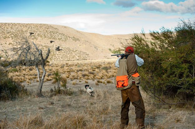 Familiarize the hunting area | Practical Quail Hunting Tips Every Hunter Should Follow
