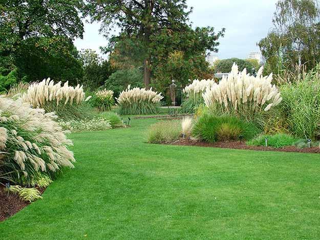 Ornamental Grass Or Groundcover | 50 Easter Egg Hiding Spots