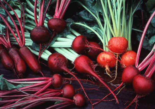 Beets | 20 Survival Gardening Plants For Spring