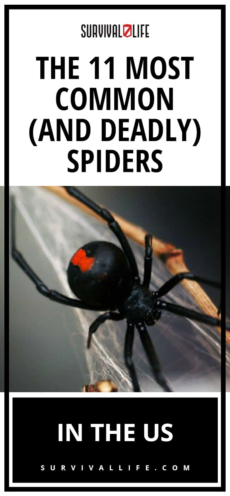 The Most Common (And Deadly) Spiders In The U.S. | https://survivallife.com/most-common-deadly-spiders-usa/
