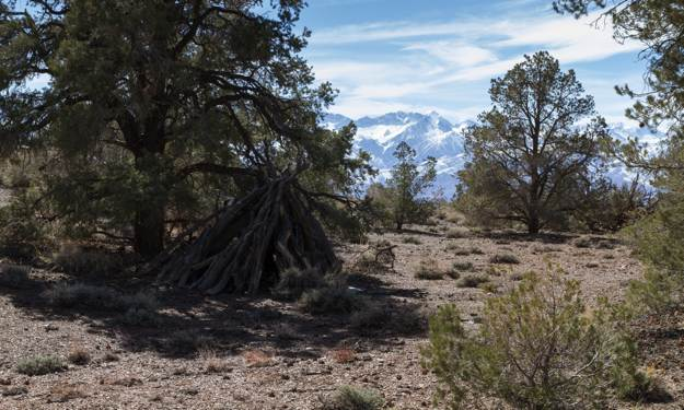 Location and Material Selection | How to Build A Wickiup | Survival Life