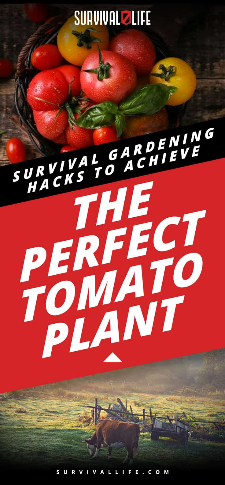 Survival Gardening Hacks To Achieve The Perfect Tomato Plant