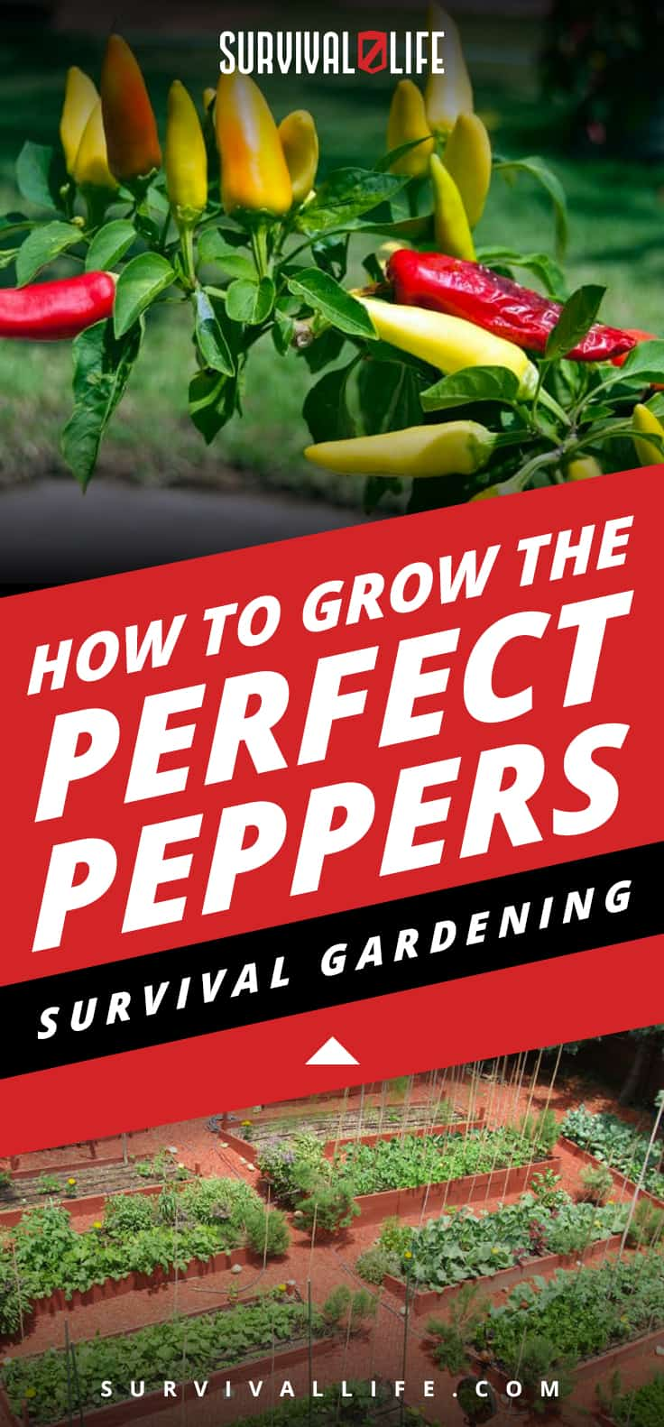 How To Grow The Perfect Peppers: Survival Gardening
