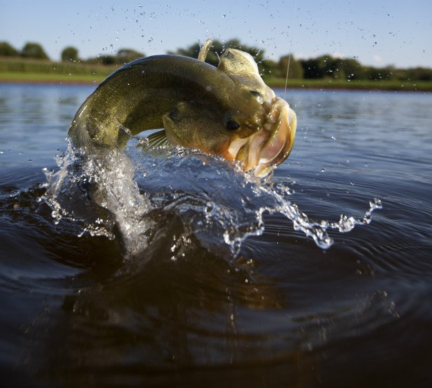 Bass Fishing for Beginners   Tips for Fishing 101