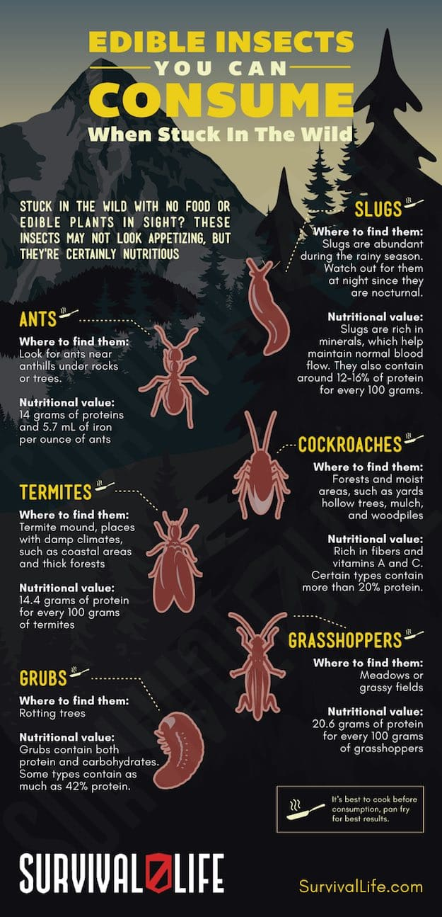 Infographic | Edible Insects You Can Consume When Stuck In The Wild