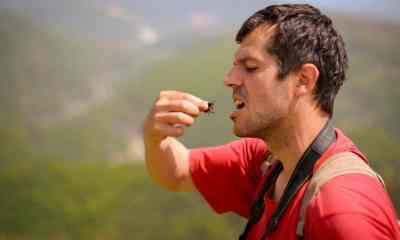 Feature | Man eating bug, survival in nature | Edible Insects You Can Consume When Stuck In The Wild