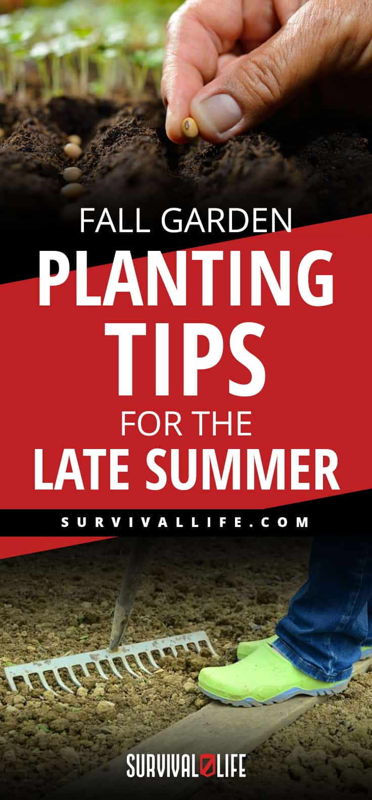 Fall Garden Planting Tips For The Late Summer
