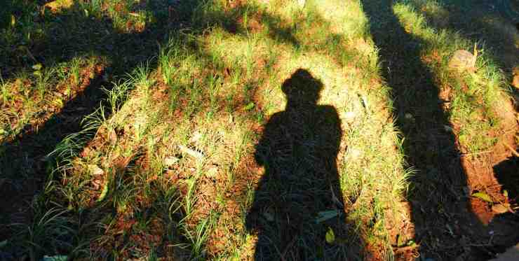 A shadow of a person and trees on grass | Outdoor Survival Skills | Tell Time In The Wild Without A Watch