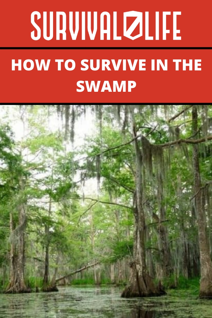 Placard   How to Survive in the Swamp   dangers of swamps