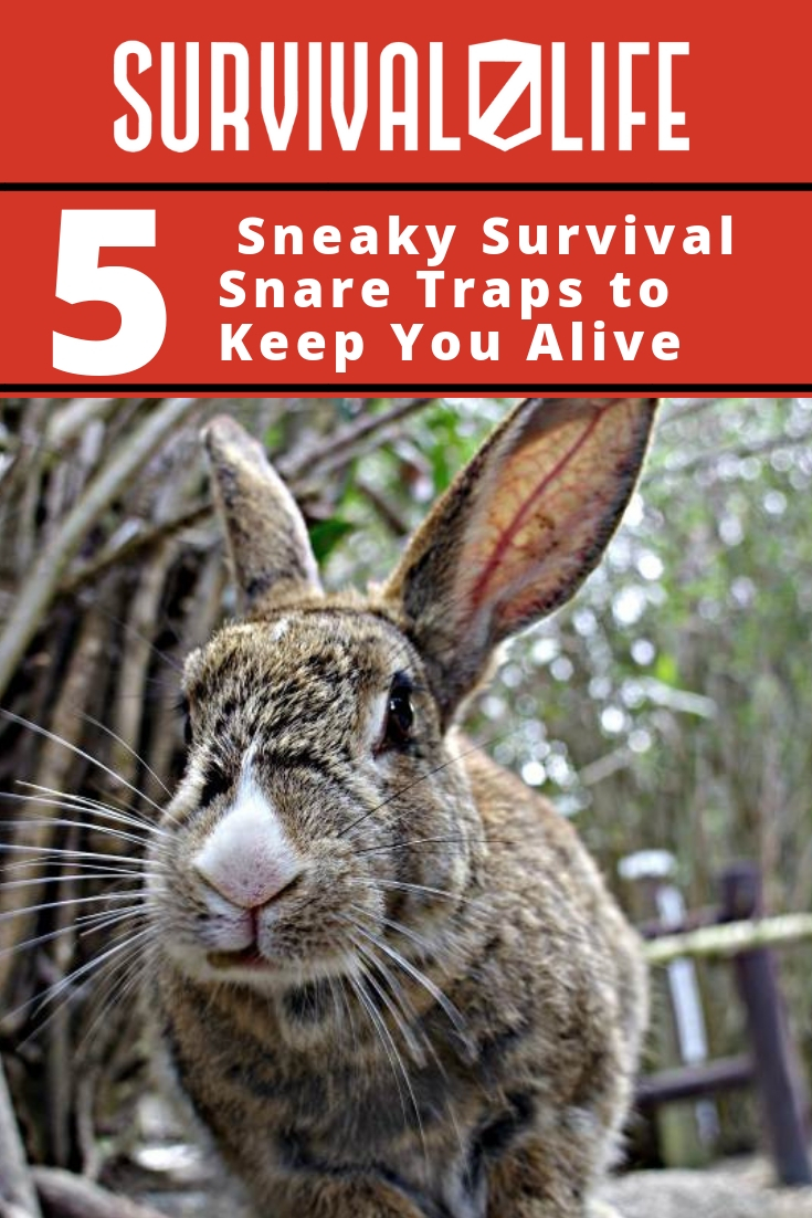 Placard | Snare Traps | Sneaky Survival Snare Traps to Keep You Alive | Primitive Trapping