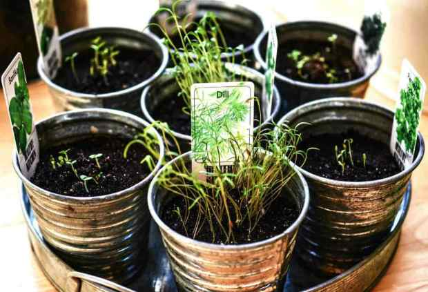 Herbal plants in small silver pots | Conquer The Frontier Like An American Pioneer