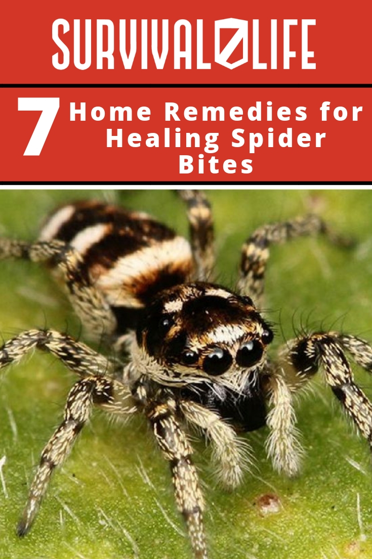 Placard | Home Remedies for Healing Spider Bites  | Symptoms Of Spider Bites