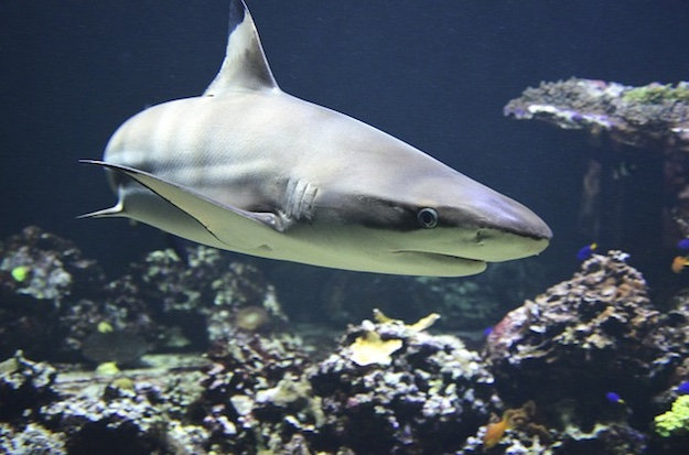 Shark | Beach Animals To Watch Out For When On Vacation