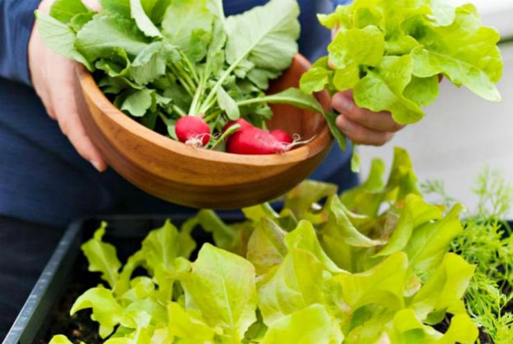 Radish in wooden bowl | Container Gardening Tips For Preppers And Survivalists