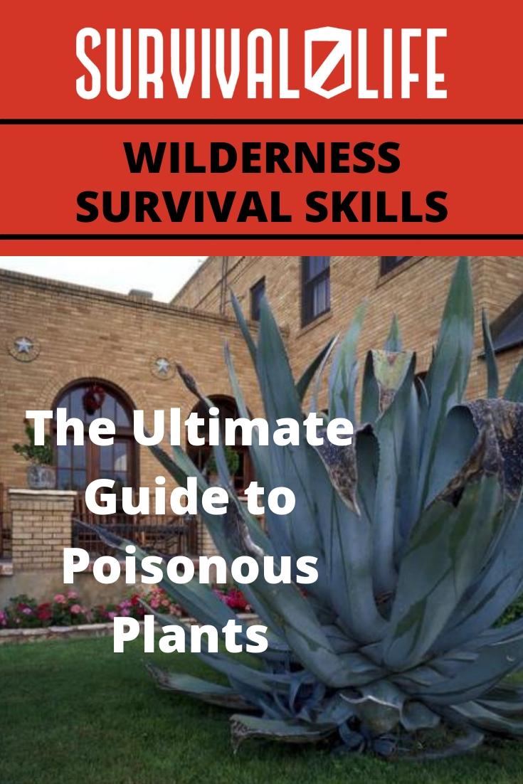 Wilderness Survival Skills: A Guide To Identifying Poisonous Plants | https://survivallife.com/wilderness-survival-skills-what-you-need-to-know-about-poisonous-plants/