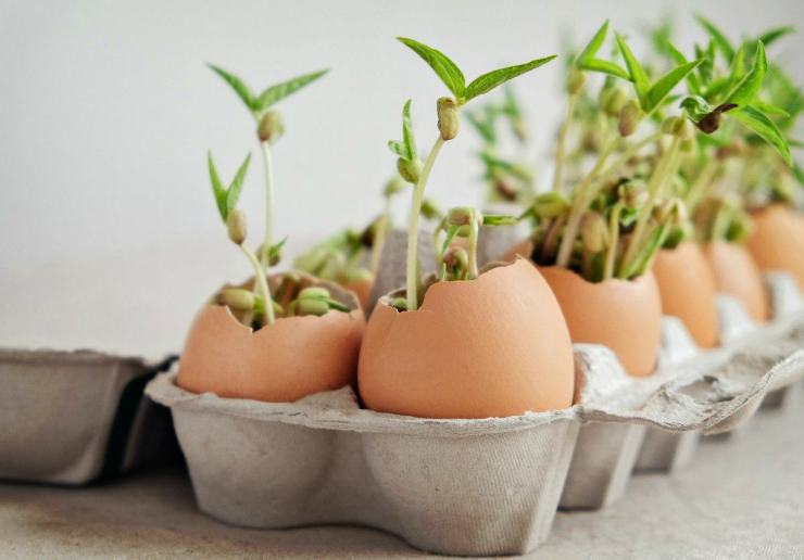 Seed in eggshells | Egg Carton Seedlings