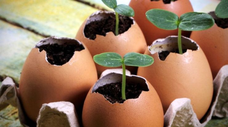 Egg Carton Seedlings | DIY Seedling Greenhouse Ideas