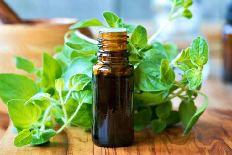 Essential Oil with oregano leaves | Home Remedies For Cold And Flu | Surprisingly Simple Natural Relief