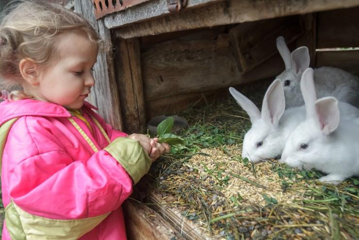 Sustainable Food Benefits | Rabbits: Sustainable Food Source